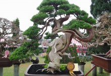 VIETNAM BONSAI PLANT TOUR AND HALONG BAY 5 DAYS 4 NIGHTS