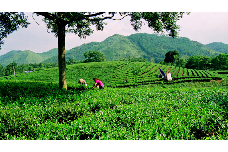 BIKING TOUR TO TANCUONG - THAI NGUYEN TEA PLANTATION